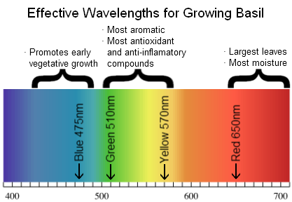 Effect of artificial light on plant growth