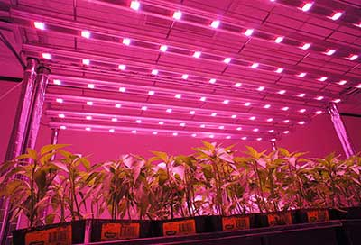 Supplemental lighting guidelines for greenhouses
