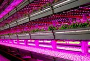 Best grow light for greenhouse