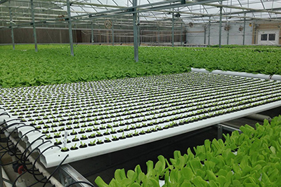 greenhouse hydroponic system