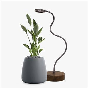 چراغ رشد گیاه پایه دار