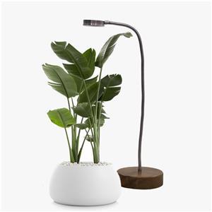 لامپ مخصوص رشد گیاه رومیزی