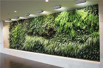دیوار سبز و نور رشد گیاه